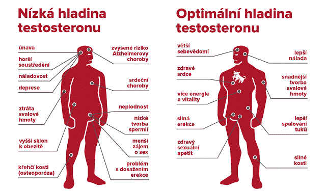 primulus jak zvysit hladinu testosteronu