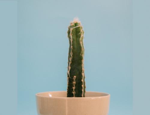 Předčasná erekce – co o ní nevíme